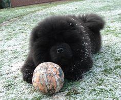 black pup- Gorgeous