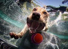 Realmente a vida de um cachorro é de dar inveja…