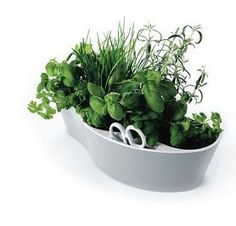 Windowsill Herb Boxes