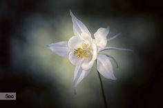 Photo Artistic flower... par Almqvist Photo on 500px