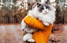 kedilerde-kil-yumagi-sorunu