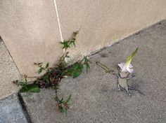 "David Zinn : ""Thanks to a downturn in dragon-fighting, the Valiant Mouse of Ferndale has been forced to pay his bills with a little quixotic weed removal on the side"" - 9/23/2014"