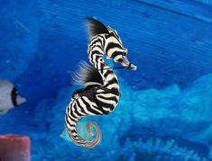 sea life - sea life photography - sea life underwater - sea life artwork - sea life watercolor sea l Underwater Creatures, Ocean Creatures, Beautiful Sea Creatures, Animals Beautiful, Planeta Animal, Salt Water Fish, Water Animals, Sea Dragon, Delphine