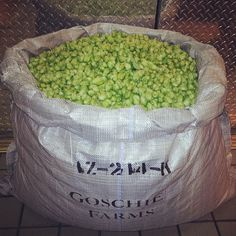 Fresh hop season has begun! #tettnang #freshhop #craftbeer