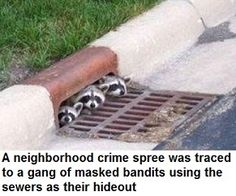 I've seen these lil critters