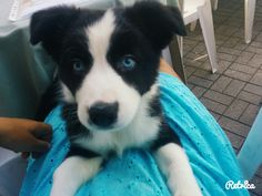 Pupy, eyes, dog, beatiful