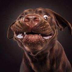 The Funny Faces Of Dogs Trying To Catch Treats. Christian Vieler is a German photographer that created a series of portraits of dogs catching treats Silly Dogs, Funny Dogs, Cute Dogs, Smiling Dogs, Love My Dog, Animals And Pets, Funny Animals, Cute Animals, Christian Vieler
