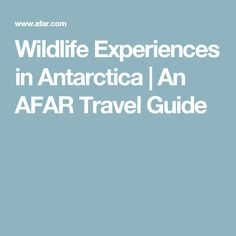 Wildlife Experiences in Antarctica | An AFAR Travel Guide