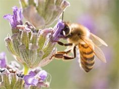 Help build momentum to protect bees!  Bees have been in the news quite a lot lately. Beekeepers are reporting record-breaking losses this year — with 40% or more of their bees dying off — and new studies continue to strengthen the case that pesticides are a key contributing factor...