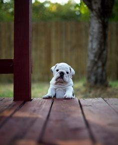 Adorable puppy has been waiting to play