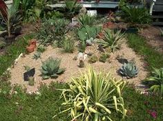 Cactus Garden Ideas cowboys and indians container garden Image Result For Cactus Garden Ideas
