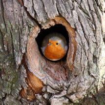 You rang? All Birds, Cute Birds, Pretty Birds, Little Birds, Beautiful Birds, Animals Beautiful, Cute Animals, Robin Bird, Tier Fotos