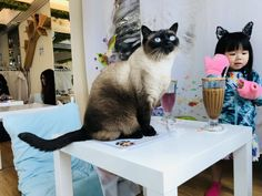 Check out pet news stories and also current animal news and animal current events! See many animal stories or animal news stories! Hong Kong Cafe, Pet News, Cat Cafe, Cat Health, Maine Coon, Cool Cats, Your Pet, Kittens, Pets