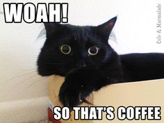 I like my coffee how I like my cats… http://coleandmarmalade.com