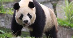 China prohíbe alimentos derivados de especies en peligro