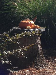 FALL LOVE CONTEST IS ON! - The Enchanted Home