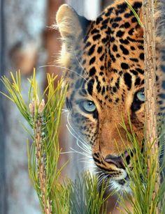 lovenaturewildlife:Beauty of Nature & Wildlife magicalnaturetour:mv12345 via Tumblr