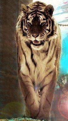 I love Big cats!