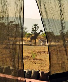 Love to look out my window and see a giraffe Chem Chem Safari, Tanzania