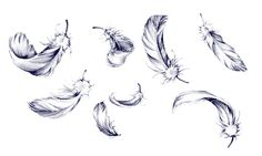 Feather Drawings - Bing Images