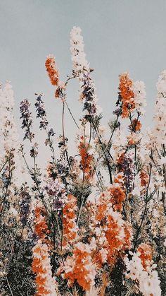 Frühling Wallpaper, Flower Phone Wallpaper, Iphone Background Wallpaper, Wallpaper Patterns, Wallpaper Quotes, Iphone Backgrounds, Iphone Wallpapers, Aztec Wallpaper, Butterfly Wallpaper