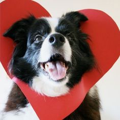 Happy Valentines Day everyone . Sending you all a hug regardless of where you are in the world