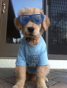 cachorro Ray Charles