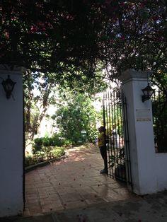 Cuba garden