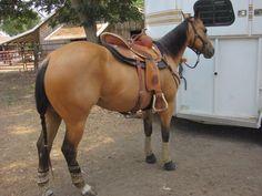 32 Best Barrel Horses Images On Pinterest Barrel Racing Horses