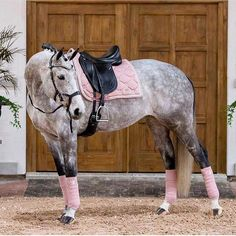 - Horse - Rose grey with pink tack? Yes please 🙋♀️ Find out our top five riding . Rose grey with pink tack? Yes please 🙋♀️ Find out our top five riding boot brands! Link in the bio 👆💕. Cute Horses, Pretty Horses, Horse Love, Beautiful Horses, Animals Beautiful, Cute Animals, Pink Animals, Horse Gear, Horse Riding Boots