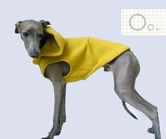 Yellow hoodie for Italian Greyhound. $26.00, via Etsy.