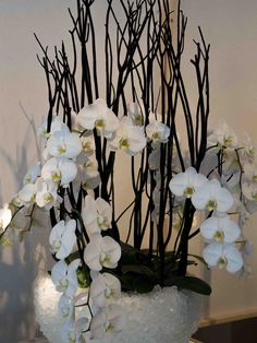 #Orchidee
