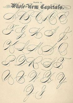penmanship flourishes - click to enlarge