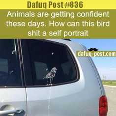 weridest Bird's shit on car - DAFUQ POSTS