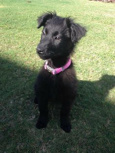 Meet Jill. Jill is one of Jillian's pups and somewhat fluffy, though more terrier like fur. Jill is adorable and of course like most of the smaller females in a litter, she's the spunky one. Jill is fostered with Melinda in Apollo Beach. Contact...