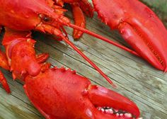 Cooked Lobster - How to Cook Lobster, Crab, and Shrimp : How to Finish Breaking Down a Whole Lobster - Checkout this informative video at the bottom of this site about cooking lobsters - Pass it on great read - http://www.bestmainelobster.net/cooked-lobster/