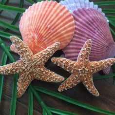 Simple and elegant sugar starfish are the perfect addition to your grooms attire!