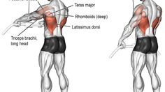 Cable straight-arm pull-down exercise