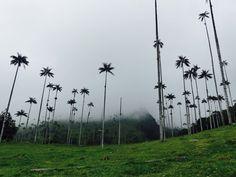 Vallée de Cocora & Salento en Colombie