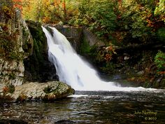 Abrams Falls is a short but powerful falls near stop #10 Cades Cove.  Take a moderate 5 mile hike.  Entrance to Great Smoky Mountains National Park ($0).