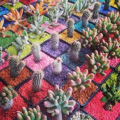 Suculentas y cactus on pinterest cactus terrarium and for Cactus variedades