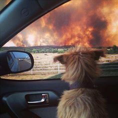 Moving Photo Of A Dog Watching The Yarnell Arizona Wildfire