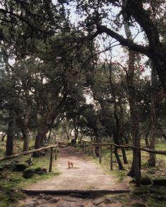 Sardinia landscape: Il sito di Romanzesu è circondato da un magico bosco di…