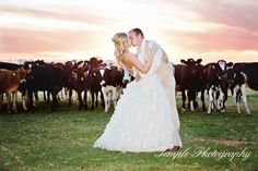Country Themed Wedding with curious cows.  This photo was taken at Double T Ranch in Stevensen CA.