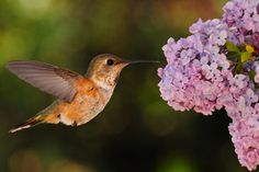 I need a camera like this. What I wouldn't be able to do if I could catch a hummingbird's wings mid-stroke :)
