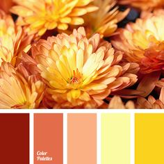 Such a bright, colorful range, which is burning with hot heat. A joyful combination of shades of yellow, peach and red. These splendid colors are able to p.
