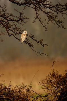 Owl in darkening sky...