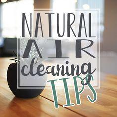 Natural Air Cleaning Tips http://dailymom.com/nurture/natural-air-cleaning-tips?utm_source=rss&utm_medium=Sendible&utm_campaign=RSS