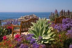 The benches above Treasure Island Beach in Laguna Beach