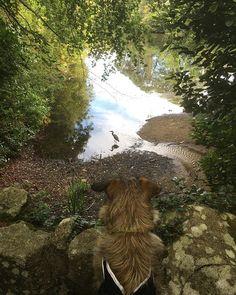 Bird watching in Marley park O Reilly, Bird Watching, Dublin, Ireland, Park, Dogs, Plants, Instagram, Pet Dogs